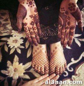 حناء-صحراوية-باللصق_00081-291x300 الحناء الصحراوية الموريتانية